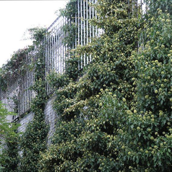LangFulton-Green-Wall-plant-trellis-Heathrow-Academy-8