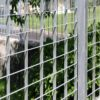 L+F-Garda-pressure-locked-steel-grating-fence-5