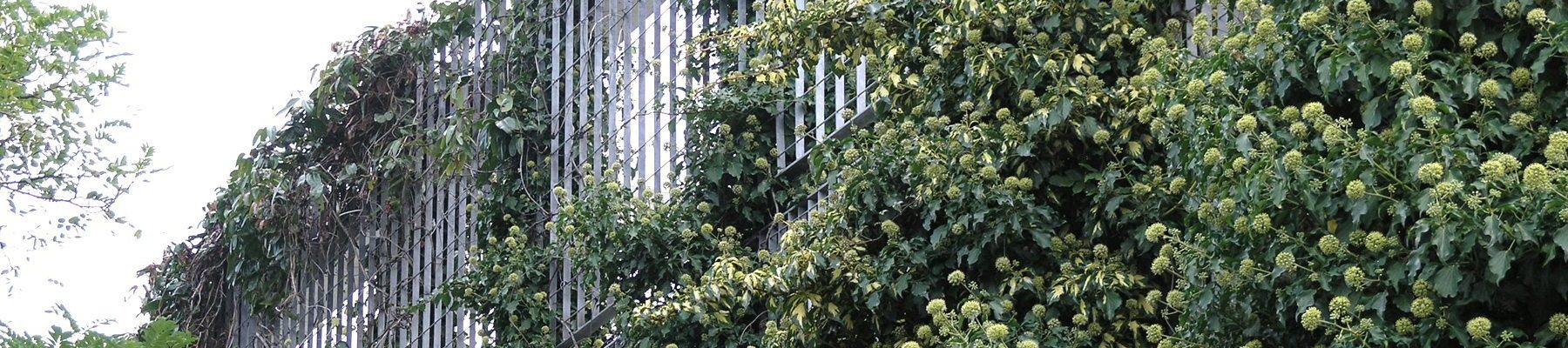 Lang+Fulton-Green-Wall-plant-trellis-Heathrow-Academy-banner1